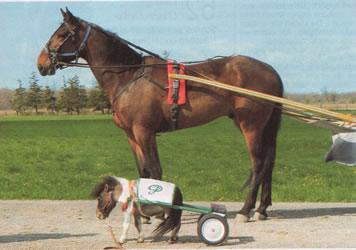 Kleinstes Pony Der Welt